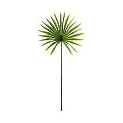 Tige palmier soleil