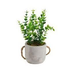 Plante à suspendre