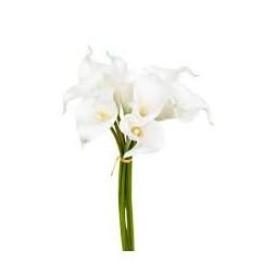 Bouquet de 8 arums blancs