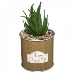 Plante en pot + message