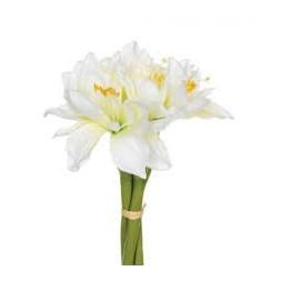 Bouquet de 6 amaryllis