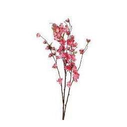 Tige fleurs de cerisier