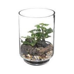 Terrarium bonsaï