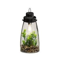 Terrarium ampoule + plante